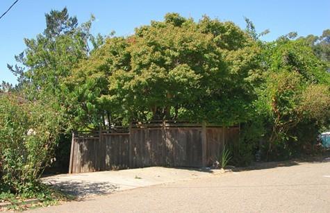 Overgrown vegetation hides Quans home.