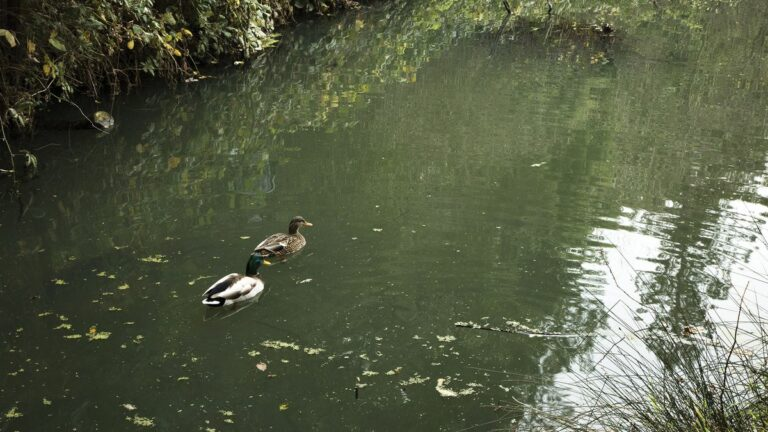 Oakland's Sewer Problems Still Stink