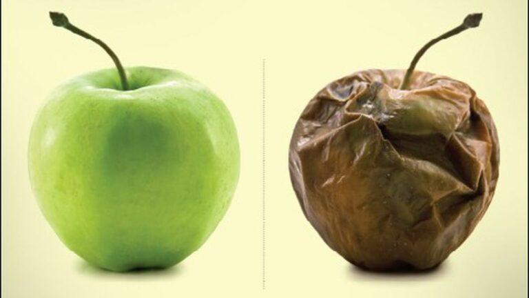 Measuring Food Waste