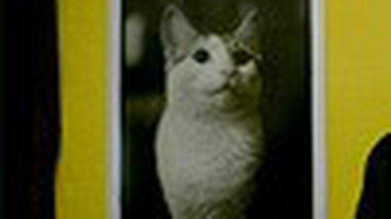 Anticon's New Scaredy-Cat