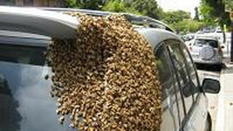 Novel Anticar Strategy: Bees v. SUVs
