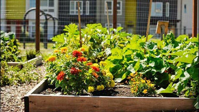 Oakland Slow to Okay More Public Urban Gardens