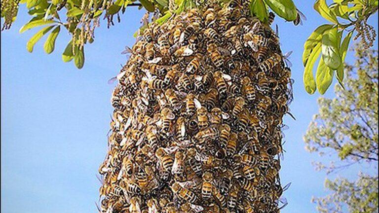 Swarm Mentality