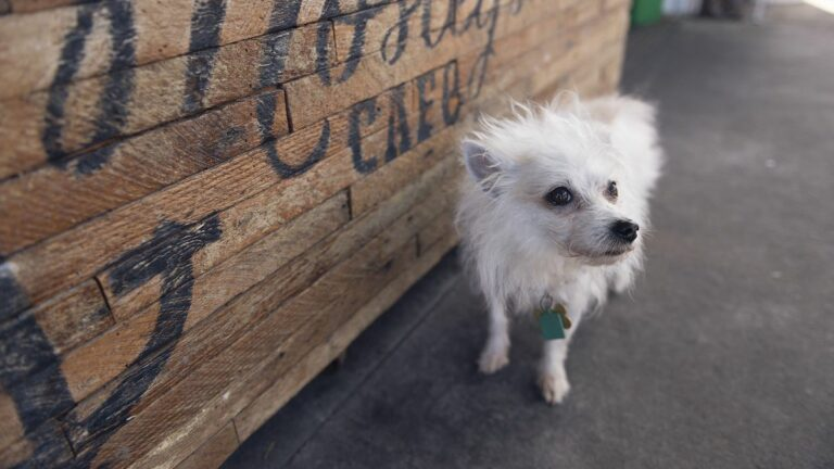 The Best Dog-Friendly Restaurant Patios in the East Bay