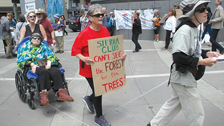 East Bay Environmentalists at Odds Over Future of Eucalyptus Trees