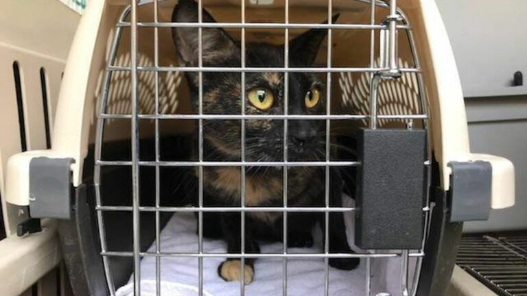 The East Bay SPCA Helps Overcrowded North Bay Animal Shelters Affected by Fire